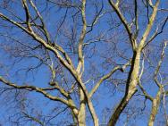 Blätterloser Baum