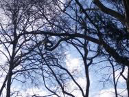 Bäume und Äste