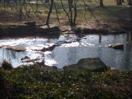 Am Teich in Meditation
