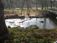 Am Teich in der Stille