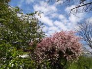 Blütentragende Bäume