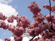 Blüten vor Himmel