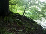 Baumwurzel am Steinbruch